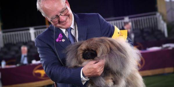 """كلب من لاراص ديال """"بيكينيز"""" دا لقب أقدم مسابقة ميريكانية – فيديو"""