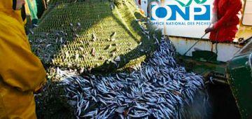 حركة تنقيلات واسعة تطال مسؤولي المكتب الوطني للصيد البحري بالداخلة