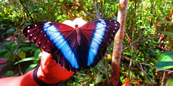 دراسة: كولومبيا فيها أكبر عدد ديال أنواع الفراشات فـ العالم