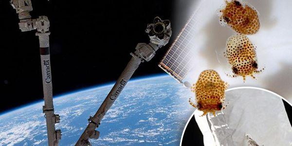 """""""NASA"""" صيفطات 5000 حيوان مجهري باش يجربو قدرتو على العيش فـ الفضاء"""