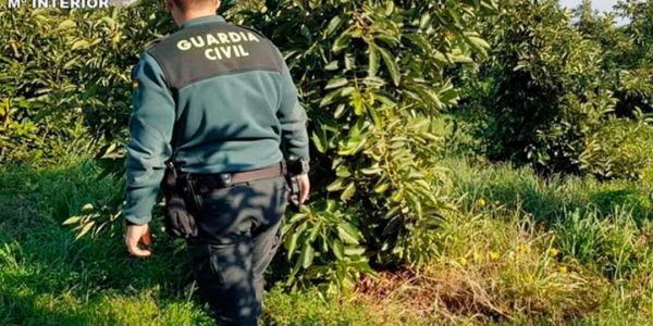 اسبانيا: مغربي حصل مع عصابة سرقات 1.5 طن ديال لافوكا