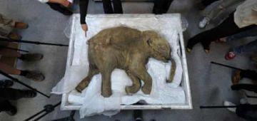 بعدما نقارض هادي 4000 سنة.. علماء غايحاولو يرجعو حيوان للحياة – فيديو