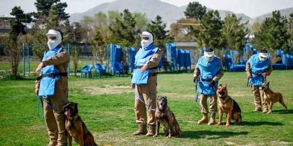 ميريكانيين محيحين وكيطالبو بايدن باش يتدخل ويرجع الكلاب اللي بقاو حاصلين فـ أفغانستان