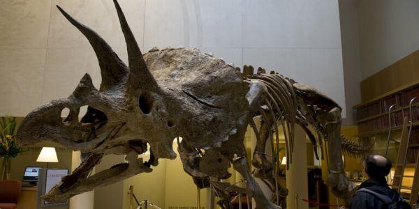 بقايا متحجرة ديال أكبر ديناصور عندو 3 دالكَرون غاتباع فـ باريس – فيديو