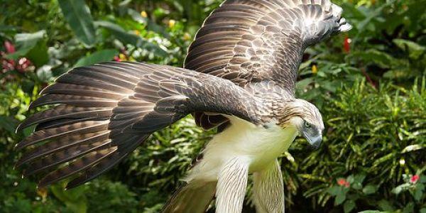 باحثون: 30 فالمية من الطيور المفترسة كتواجه خطر الانقراض