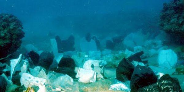 كارثة.. البحر الأبيض المتوسط فيه كثر من 3760 طن ديال الميكة