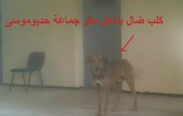 الفايسبوكيون يتداولون صورا تحرج رئيس جماعة بالفقيه بن صالح. غائط خلف مكتب الرئيس وكلاب ضالة تغزو مقر جماعته=صور=