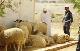عصابة المواشي تضرب ببني ملال والفلاحون يستنجدون