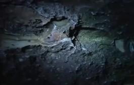اكتشاف عظام متحجرة نواحي اسفي تعود لحقبة ما قبل التاريخ + فيديو