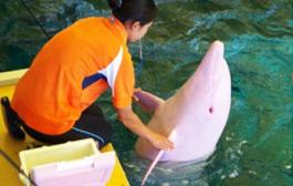 بالفيديو. دلفين حربائي كيتبدل اللون ديالو فوسط الما على حساب الحالة النفسية ديالو