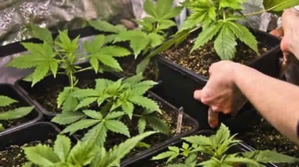 المتابعة في حالة سراح لرئيس جماعة إعتقل قبل شهر ونصف بتهمة التحريض على زراعة المخدرات في العرائش