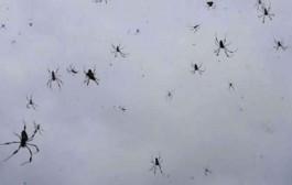 بالفيديو. الشتا بالعنكبوت. تساقط ملايين العناكب على سكان قرية بأستراليا