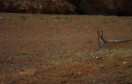 بالفيديو. عجوز مغربي يحكي بحرقة. الجزر لي من سعيدية حتى لتطوان ديالنا والصبليون كيجريو علينا يلا قربنا منهوم