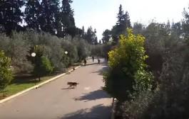 عاجل: بالفيديو.. هُجوم بالعصي والكلاب المدربة والقنينات الغازية على طالبات بالمركب الجامعي ظهر المهراز