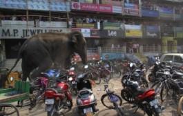 بالفيديو. فيل غاضب يدمر المنازل والمتاجر في الهند