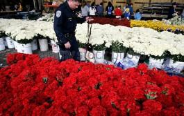 بوليس امريكا اعلن حرب على ورود عيد الحب