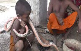 بالفيديو. حيواناتهم الاليفة قاتلة عندنا. قرية هوايتها وخدمتها هي تربية الثعابين السامة