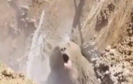 بالفيديو. عمال حفر نوضو دب من سبات الشتوي ونايض هايج عليهوم