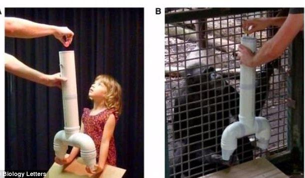 دراسة. فوقاش كيرجع بنادم ذكي على القرد
