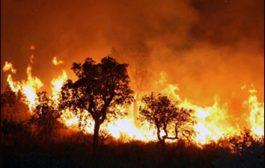 الملك محمد السادس يأمر بمساعدة البرتغال لإخماد حرائق غاباتها