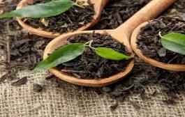 دراسة. الشاي الاسود ايخليكوم تضعافو