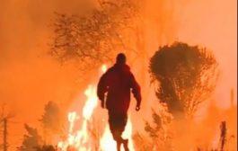 بزاف على هاد الانسانية. بالفيديو شاب غامر بحياتو باش ينقذ ارنب من حريق فالغابة