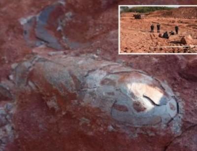 بالفيديو. لقاو بيض الديناصورات فالصين وباغيين يردوها للحياة